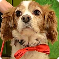 Adopt A Pet :: Rex - Rockaway, NJ
