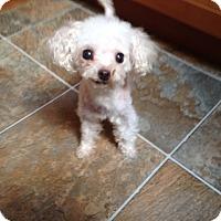 Adopt A Pet :: Squeak - Mississauga, ON