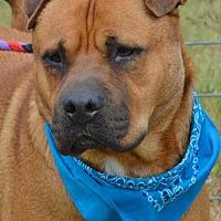 Adopt A Pet :: DRAKE - Liverpool, TX