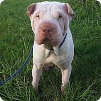 Adopt A Pet :: Rocky - Houston, TX