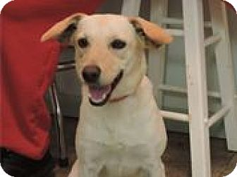 Rat Terrier/Beagle Mix Dog for adoption in Cottonport, Louisiana - Missy