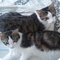 Adopt A Pet :: Marty & Max - Seminole, FL