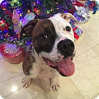 Adopt A Pet :: Samson - Davie, FL