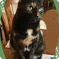 Adopt A Pet :: Bonnie - Mt. Prospect, IL