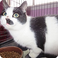 Adopt A Pet :: Freckles - Coos Bay, OR