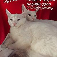 Adopt A Pet :: A Male Duo: ARCTIC & ASPEN - Monrovia, CA