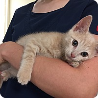 Adopt A Pet :: Oscar - Hendersonville, NC