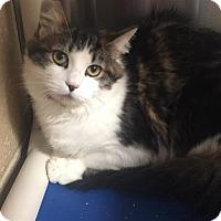 Adopt A Pet :: Lucy - Riverside, CA