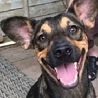 Adopt A Pet :: Lily-Adoption Pending - Dripping Springs, TX