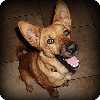 Shepherd (Unknown Type) Mix Dog for adoption in Weatherford, Texas - Cheeto