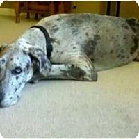 Adopt A Pet :: Trevor - Oak Ridge, TN