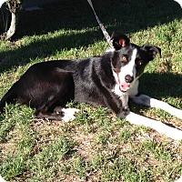 Adopt A Pet :: PANDA - San Pedro, CA