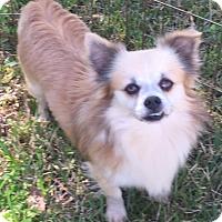 Adopt A Pet :: Bernie - Orlando, FL