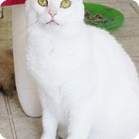 Adopt A Pet :: Helen - Dalton, GA