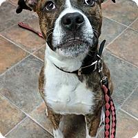 Adopt A Pet :: Sam Gotti - Lisbon, OH