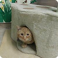 Adopt A Pet :: Rex - Menands, NY