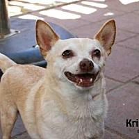 Adopt A Pet :: KRINGLE - Santa Maria, CA