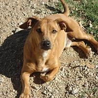 Adopt A Pet :: Coco of Lavonia - Spartanburg, SC
