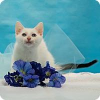 Adopt A Pet :: Nimbus - Houston, TX