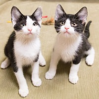 Adopt A Pet :: Silvie and Sahara - Chicago, IL