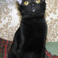 Adopt A Pet :: Rex - Las Cruces, NM
