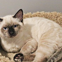 Adopt A Pet :: Tanagra - Lincoln, NE
