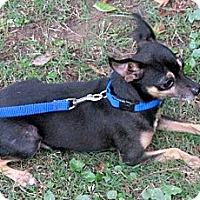 Adopt A Pet :: HOBO - Glastonbury, CT