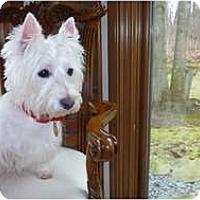 Adopt A Pet :: Missy - GARRETT, IN
