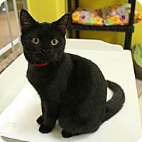 Adopt A Pet :: Patsy - Mobile, AL