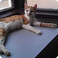 Adopt A Pet :: Lil Mo - Fairbury, NE