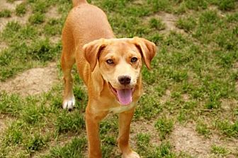 Shepherd (Unknown Type) Dog for adoption in Rossville, Tennessee - Trapper
