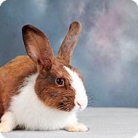 Adopt A Pet :: Hattie - Marietta, GA