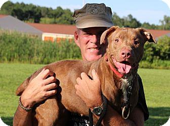 American Pit Bull Terrier Mix Dog for adoption in Elyria, Ohio - Suki-Prison Graduate