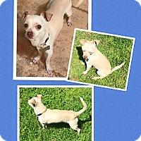 Adopt A Pet :: Poncho - Scottsdale, AZ