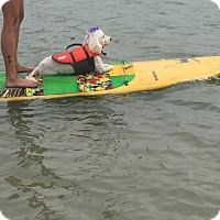 Adopt A Pet :: Wesley - Vista, CA