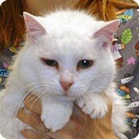 Adopt A Pet :: Sugar - Wildomar, CA