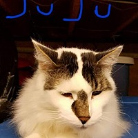 Adopt A Pet :: JuJu - Rochester, NY