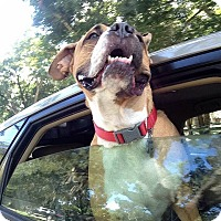 Adopt A Pet :: Pippin - Oviedo, FL