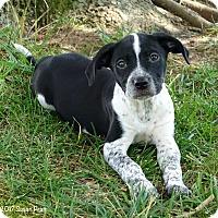Adopt A Pet :: Della - Bedford, VA