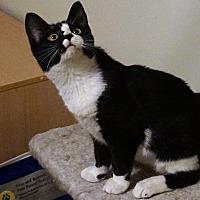 Adopt A Pet :: Zia - Morganton, NC