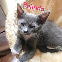 Adopt A Pet :: Belinda (Bottle Baby) - York, PA