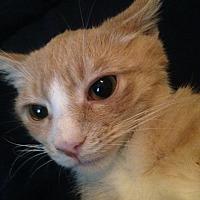 Adopt A Pet :: ALMOND - Clayton, NJ