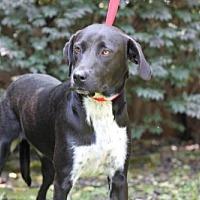 Adopt A Pet :: AMELIA - Norfolk, VA