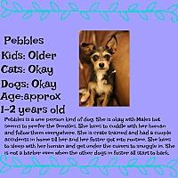 Adopt A Pet :: Pebbles - Fredericksburg, VA
