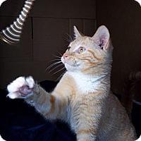 Adopt A Pet :: Tang - Brookville, IN