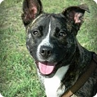 Adopt A Pet :: Ginger - Cheyenne, WY