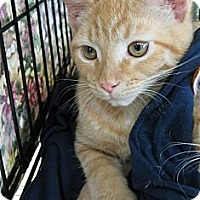 Adopt A Pet :: Henry - Frederick, MD