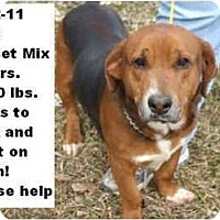 Adopt A Pet :: # 042-11 - ADOPTED! - Zanesville, OH