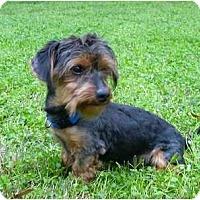 Adopt A Pet :: Willis - Mocksville, NC