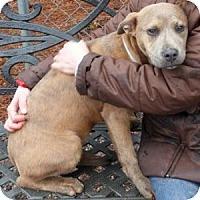 Adopt A Pet :: Brandy - Athens, GA